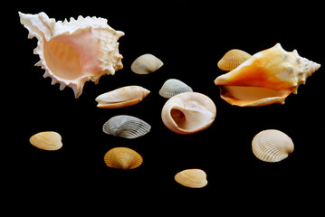 Assorted Shells from the Sea