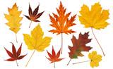 Fototapety Bunte Herbstblätter