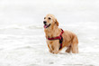 cane da soccorso in mare