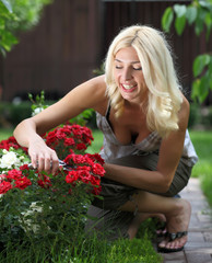 Gardening - woman cutting the rose bush in the garden