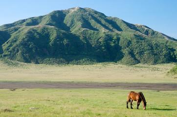 阿蘇の草千里と一頭の馬
