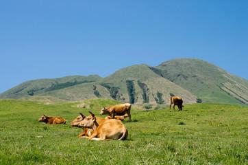 阿蘇の往生岳と赤牛