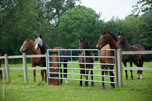 Equine Audience