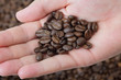 Closeup of hand holding coffee beans