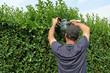 Gartenarbeit, Hecke zurückschneiden