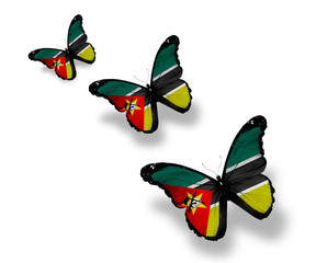 Three Mozambique flag butterflies, isolated on white