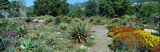 Gardens in Spring, Ojai Center for Earth Concerns, Ojai, California