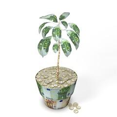 Euro Money Tree Plant