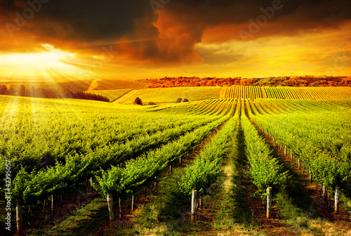 canvas print picture Stunning Vineyard Sunset