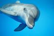 Leinwandbild Motiv Dolphin under water