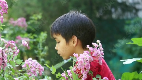 Boy exploring outdoors bush of roses on a summer day