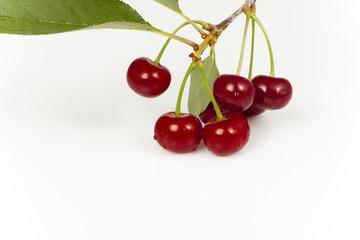 branch of cherry fruit