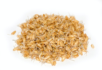 Wheat Germs Isolated on White Background