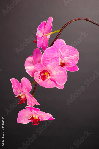 Fototapeten,blooming,orchidee,grau,hintergrund