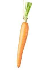 Dangling carrot isolated on white