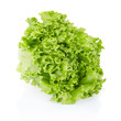 Green salad on white, clipping path included