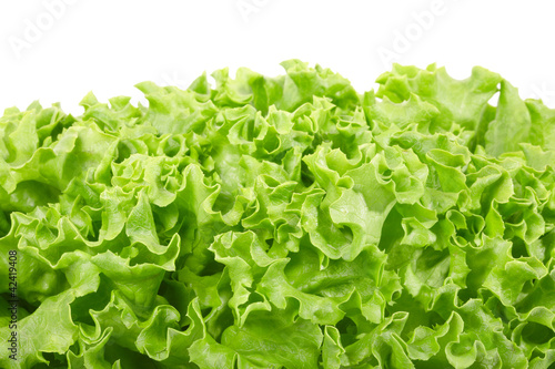 Green salad border on white, clipping path included