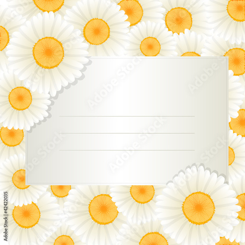 Oxeye daisy text card