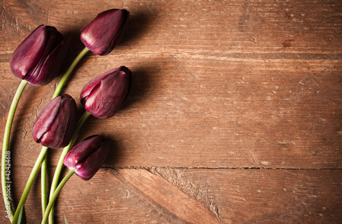 tulips on wooden background|42424618