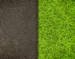 grass - 42428212