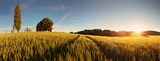 Fototapety Sunset over wheat field with path and chapel in Slovakia