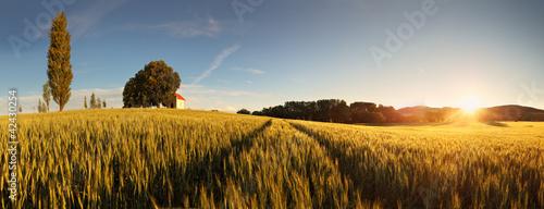 Foto op Canvas Cultuur Sunset over wheat field with path and chapel in Slovakia