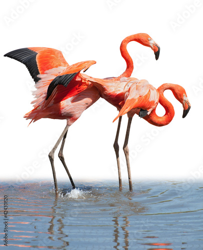 Foto op Aluminium Flamingo Loving flamingo couple