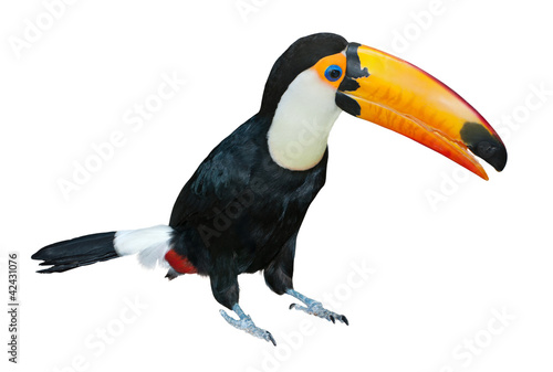 Canvas Toekan Toucan