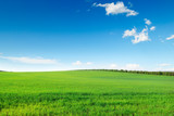 Fototapety picturesque green field