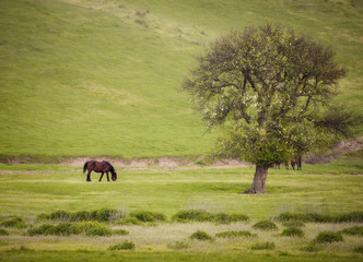 spring landscape with horse tree and green grass in morning