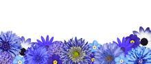 Wybór różnych Niebieski Kwiaty w dolnym rzędzie Samodzielnie