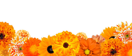 Selection of Various Orange Flowers at Bottom Row Isolated