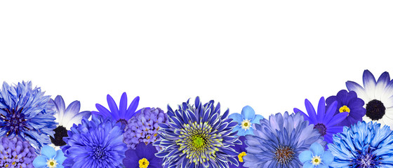Selection of Various Blue Flowers at Bottom Row Isolated
