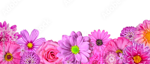 Selection of Various Pink White Flowers at Bottom Row Isolated