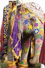 colorful elephant , Holi festival ,Jaipur, Rajasthan, India
