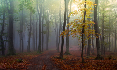 Green forest with fog during autumn