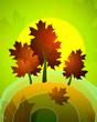 Summer maple tree