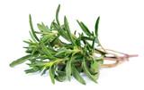 Fototapety Thyme  fresh herb