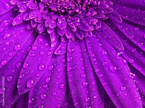 piekny-kwiatowy-tlo