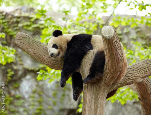 sypialny-gigantyczny-pandy-dziecko