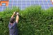Gartenarbeit, Hecke schneiden, Solar