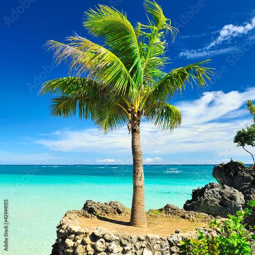 Palm tree - 42444055