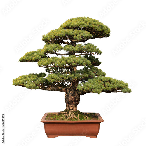 Aluminium Bonsai green bonsai tree of pine