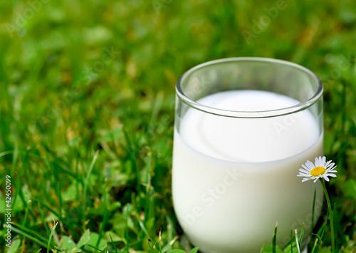 verre de lait dans l'herbe verte - 42450099