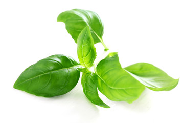 Herb Series - Basil