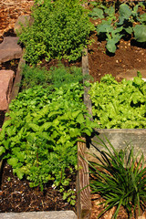 Simple Kitchen Garden