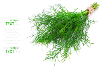 Fresh dill, Isolated on white background, with room for text