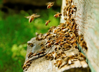 Bees at the entrance.
