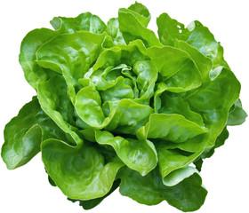Salade verte de nos jardins