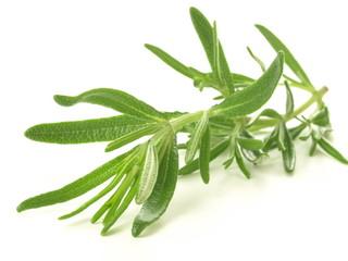 Rosemary twig